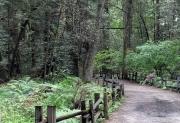 Henry Cowell Redwoods Park, Deer