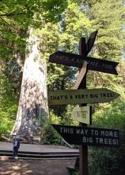 Humboldt Redwoods,Avenue of the Giants, Big Tree