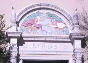 birds building