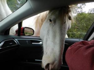 Wild horse snooping