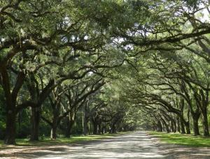 Road to the ruins of Wormsloe Plantation