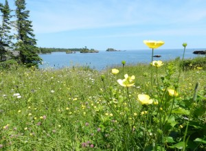 Wildflowers Rock Harbor